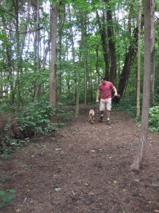 Another view of the dog trail, with a volunteer walking a dog.