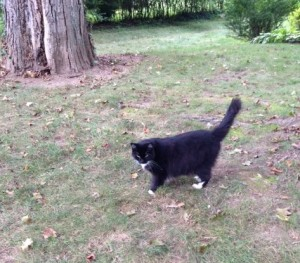 Whiskers, now, enjoying her large yard.